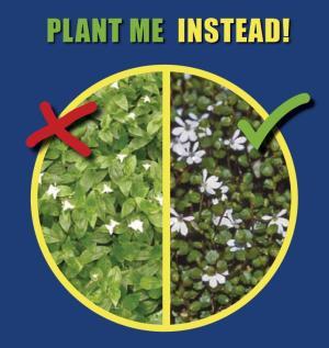 PlantMeInstead